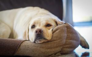 rest-dog-room